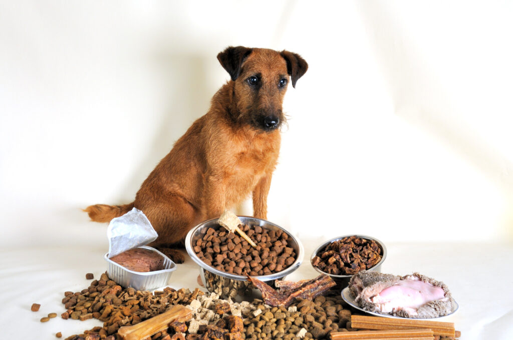 Has your dog suddenly stopped eating? Click here to learn about 6 possible causes of loss of appetite in dogs with advice on what to do about it.
