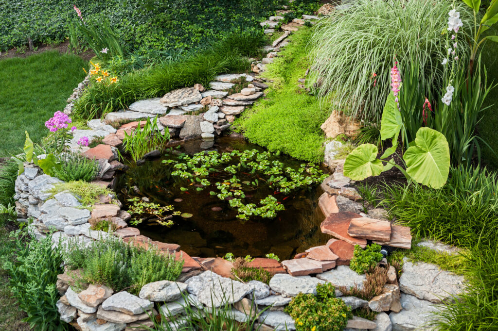 Would you like to set up a garden pond in your backyard? This guide will tell you everything you need to know to get started.